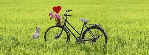 เสน่ห์ปั่นจักรยาน