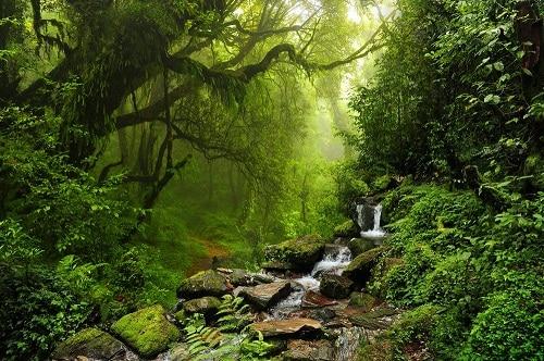 รักษาป่า วิธีประหยัดน้ำ