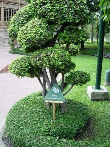 ต้นข่อย