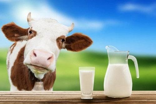 ประโยชน์ของนมวัว นมโค