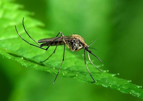 สมุนไพรไล่แมลง